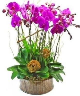 Ahşap kütükte lila mor orkide 8 li  Ardahan internetten çiçek satışı