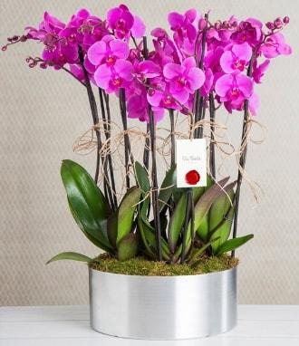 11 dallı mor orkide metal vazoda  Ardahan çiçek gönderme sitemiz güvenlidir