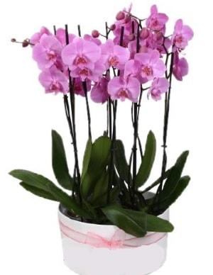 Beyaz seramik içerisinde 7 dallı mor orkide  Ardahan çiçekçi telefonları