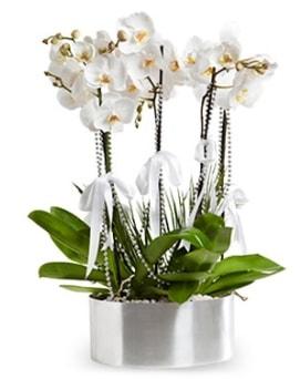 Beş dallı metal saksıda beyaz orkide  Ardahan çiçek yolla