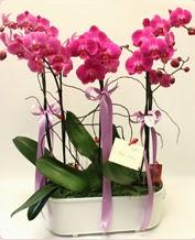 Beyaz seramik içerisinde 4 dallı orkide  Ardahan ucuz çiçek gönder