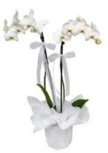2 dallı beyaz orkide  Ardahan güvenli kaliteli hızlı çiçek