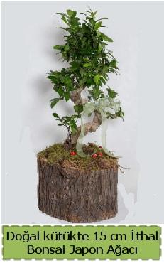 Doğal kütükte İthal bonsai japon ağacı  Ardahan çiçek gönderme