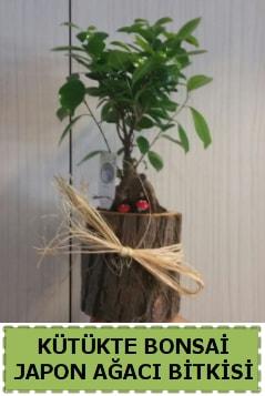 Kütük içerisinde doğal bonsai ağacı  Ardahan çiçekçi telefonları