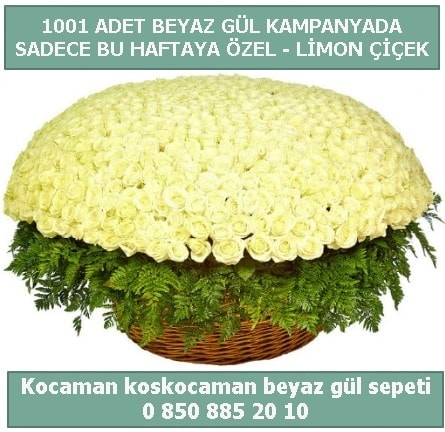 1001 adet beyaz gül sepeti özel kampanyada  Ardahan çiçek gönderme sitemiz güvenlidir
