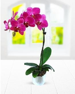 Tek dallı mor orkide  Ardahan çiçek satışı