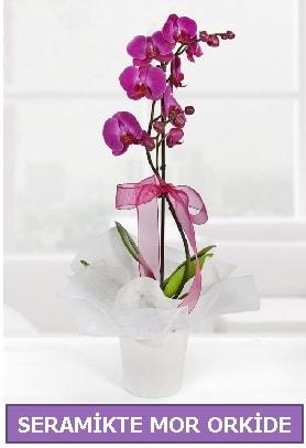 Seramik içerisinde birinci kalite tek dallı mor orkide  Ardahan İnternetten çiçek siparişi