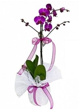Tekli Mor Orkide  Ardahan çiçek yolla
