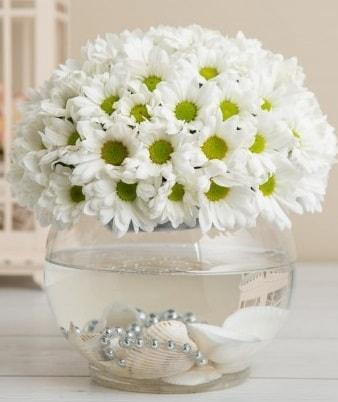 Fanusta beyaz Papatya  Ardahan çiçek satışı