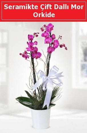 Seramikte Çift Dallı Mor Orkide  Ardahan anneler günü çiçek yolla