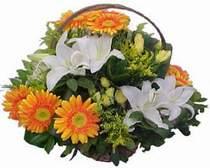 Ardahan online çiçekçi , çiçek siparişi  sepet modeli Gerbera kazablanka sepet