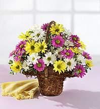 Ardahan çiçekçiler  Mevsim çiçekleri sepeti